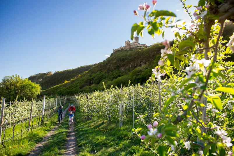 Biking near the Wine Road in South Tyrol