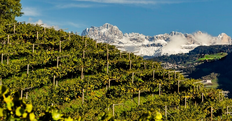 South Tyrol mountainside vineyard