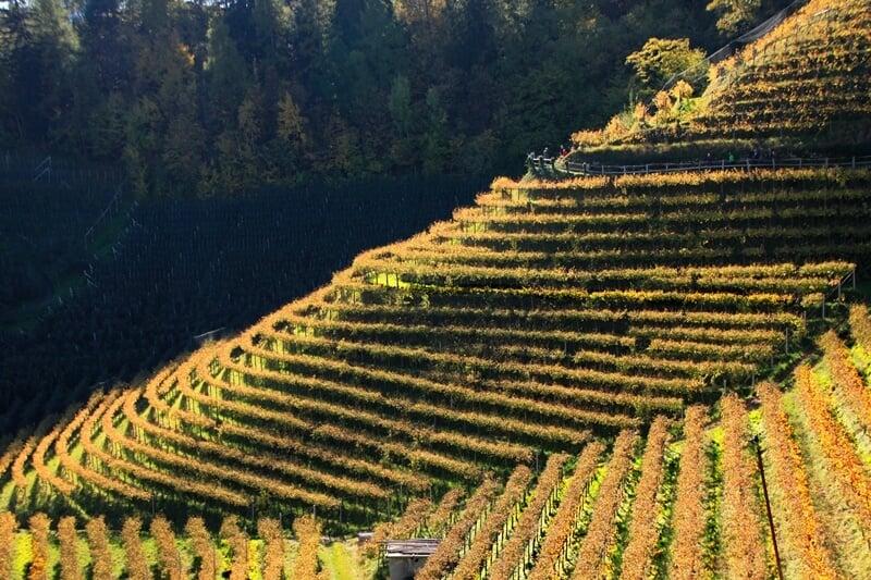 Vineyards in Merano, Italy