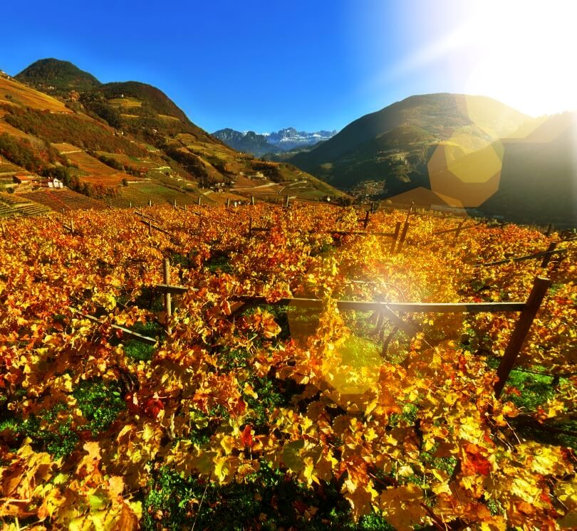 Autumn ignites the mountainside vineyards of Alto Adige into a chorus of fall colors.