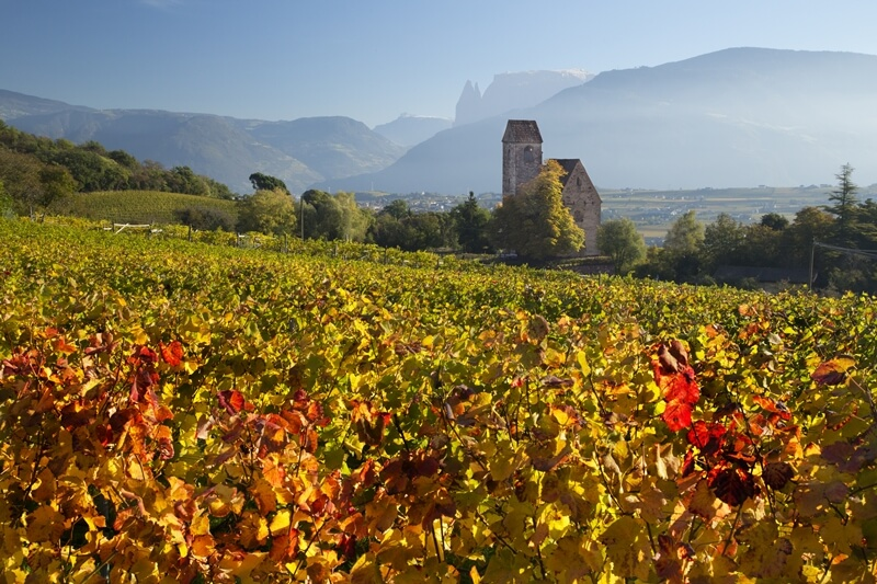 Vineyard by Bolzano