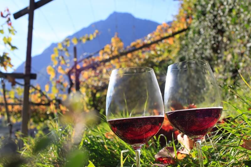 Wines of Sudtirol