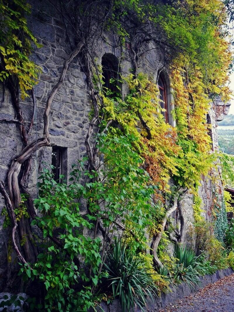 Brunnenburg Castle Vines