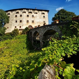 Castel Katzenzungen: Keeper of the World's Oldest Vine