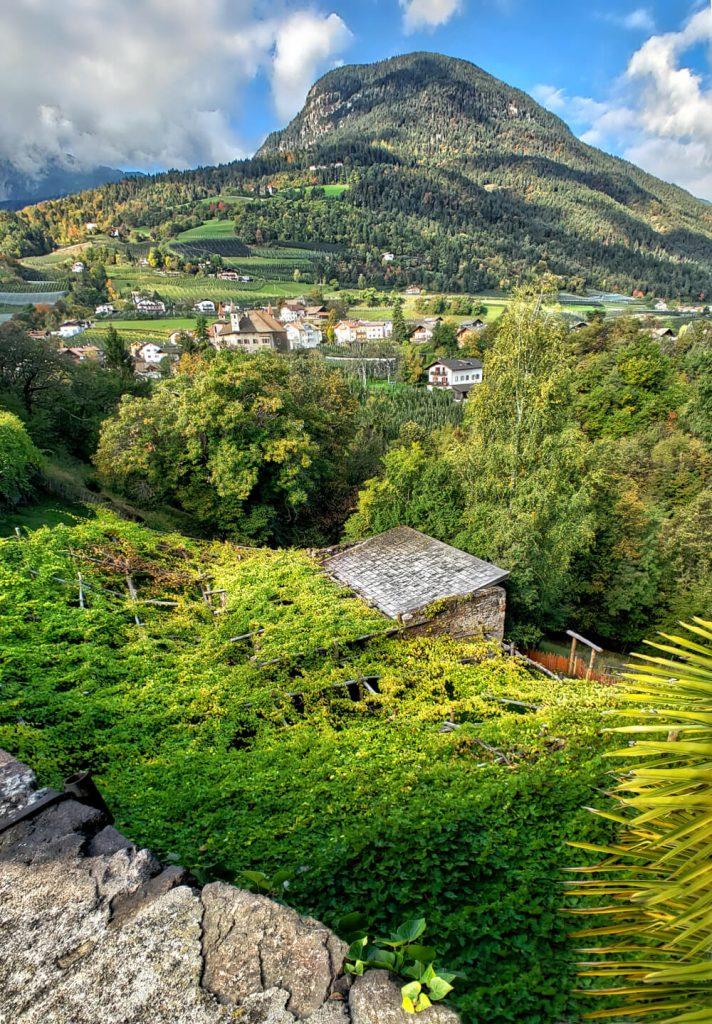 Castel Katzenzungen: Keeper of the World's Oldest Vine 38