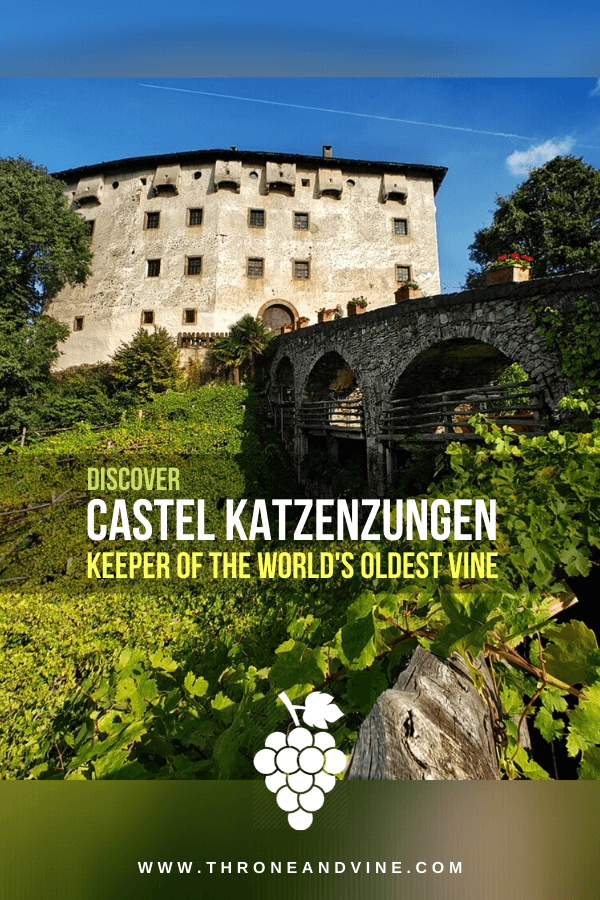 Castel Katzenzungen: Home to the World's Oldest Grapevine