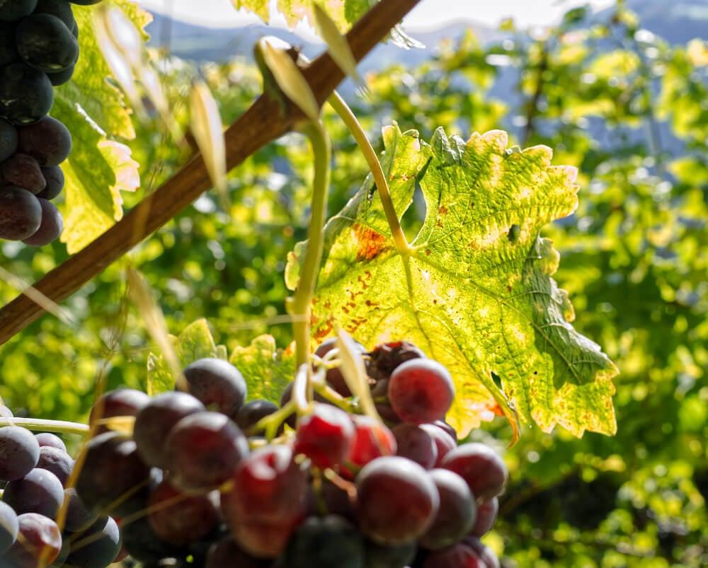 Prackfol Wine Farm: Bounty Beneath the Dolomites 9