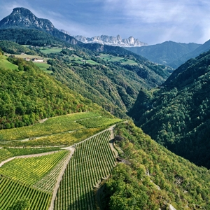 Prackfol Wine Farm: Bounty Beneath the Dolomites