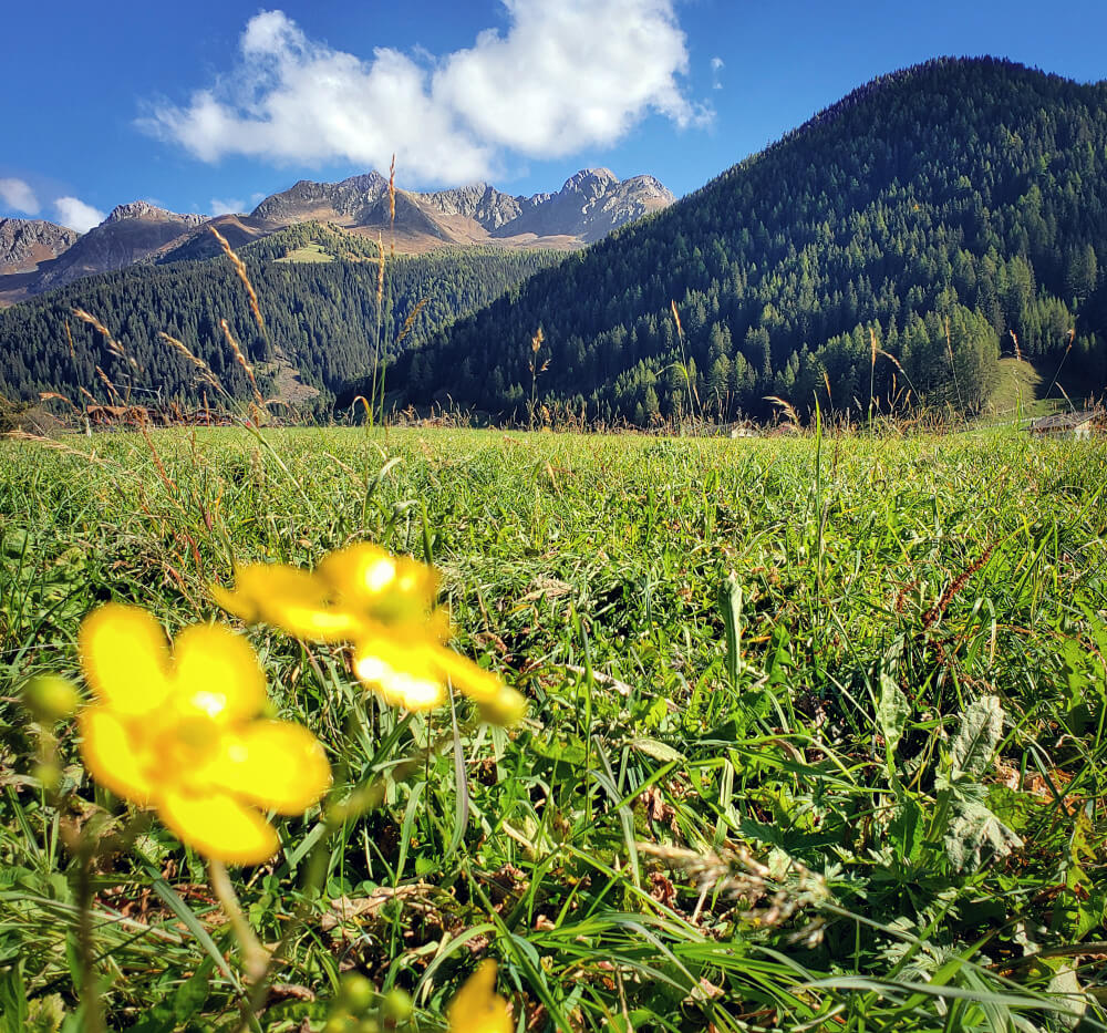 Hotel Quelle: Relaxed Luxury in the Alpine Wild 7