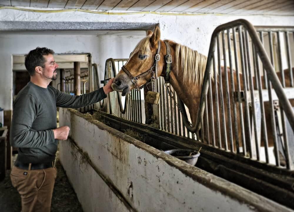 Walter Demetz Horse