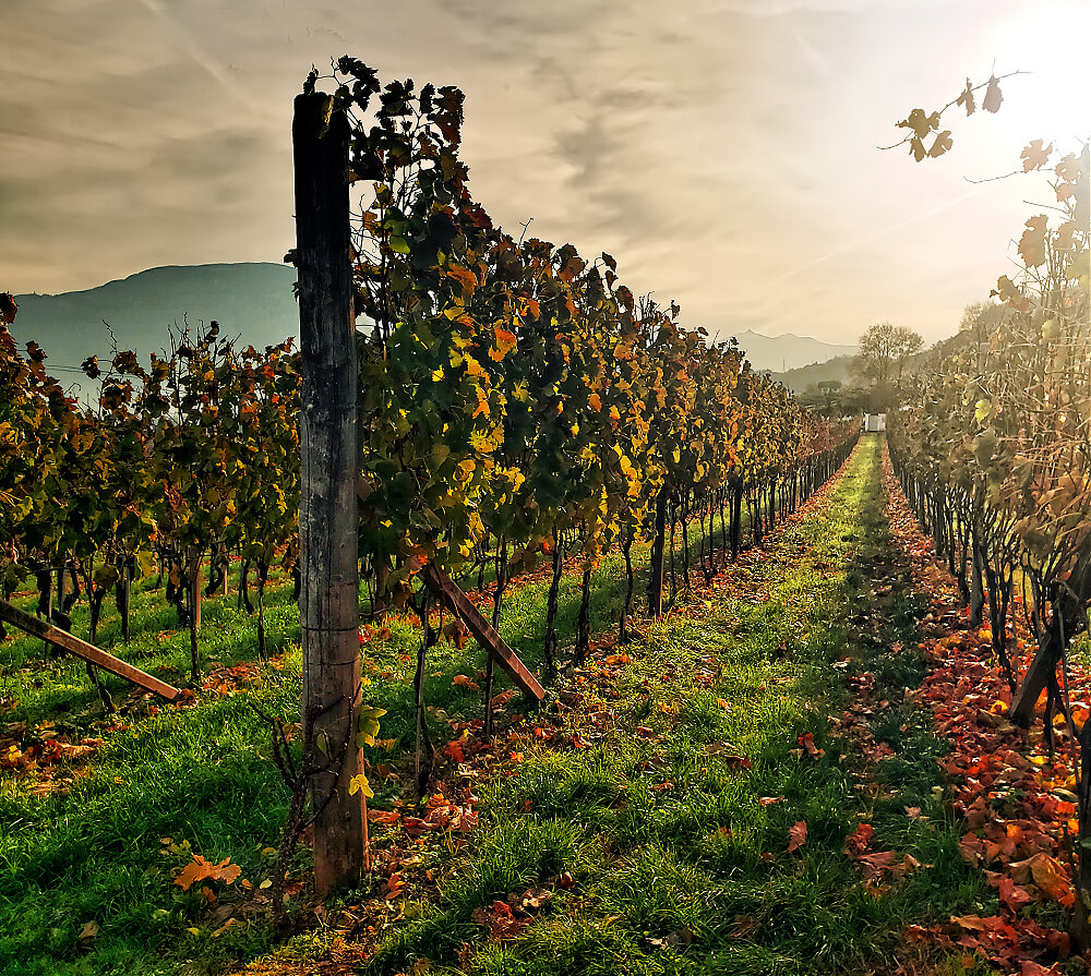 Romancing the Vine at Donà Winery 25