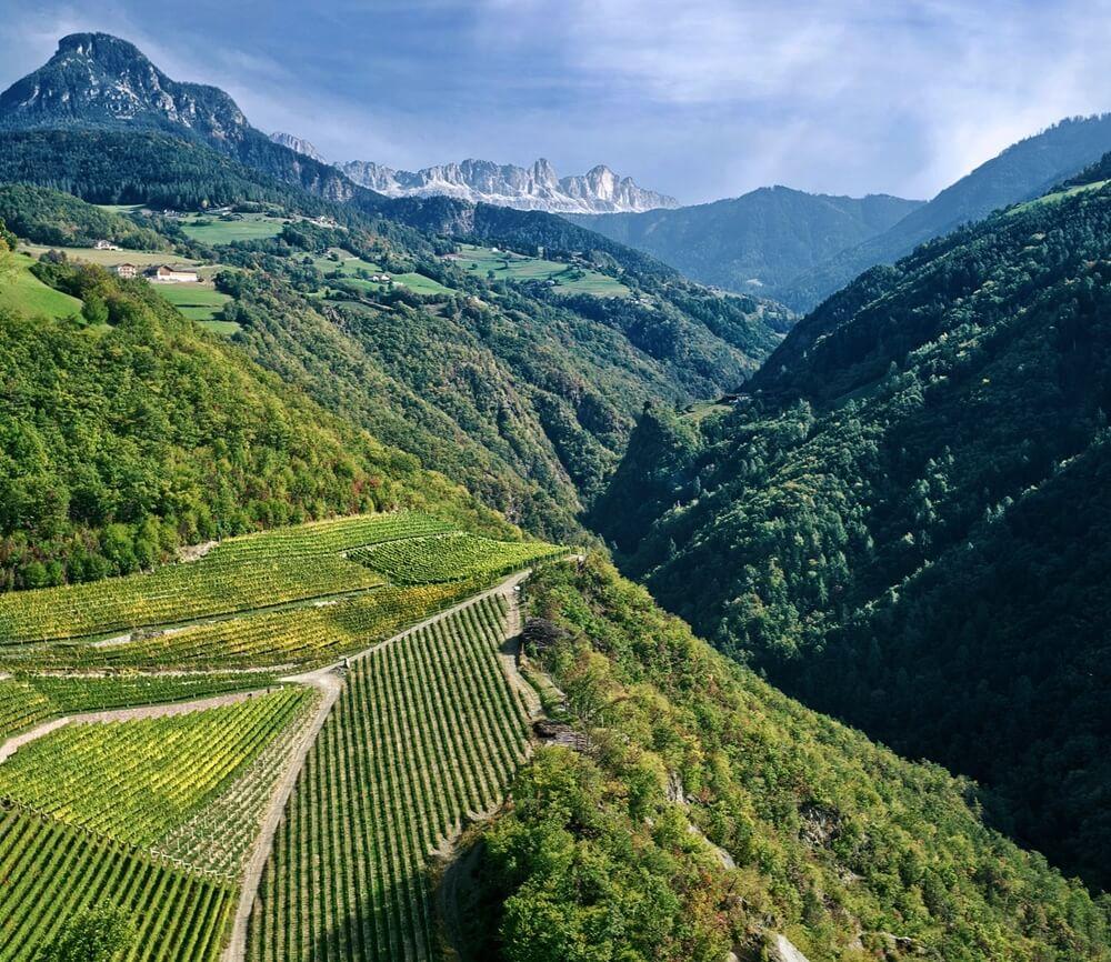 Prackfolerhof Vineyards