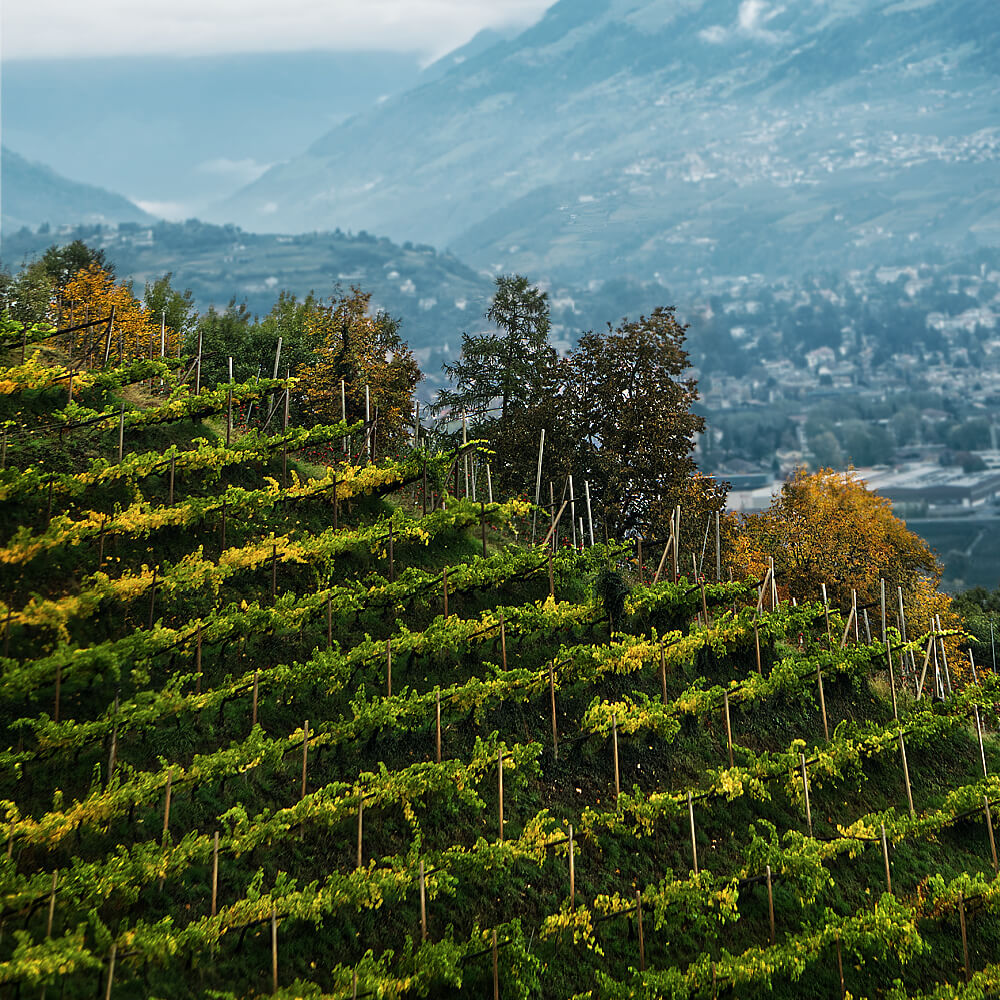 Lana, Italy Vineyards