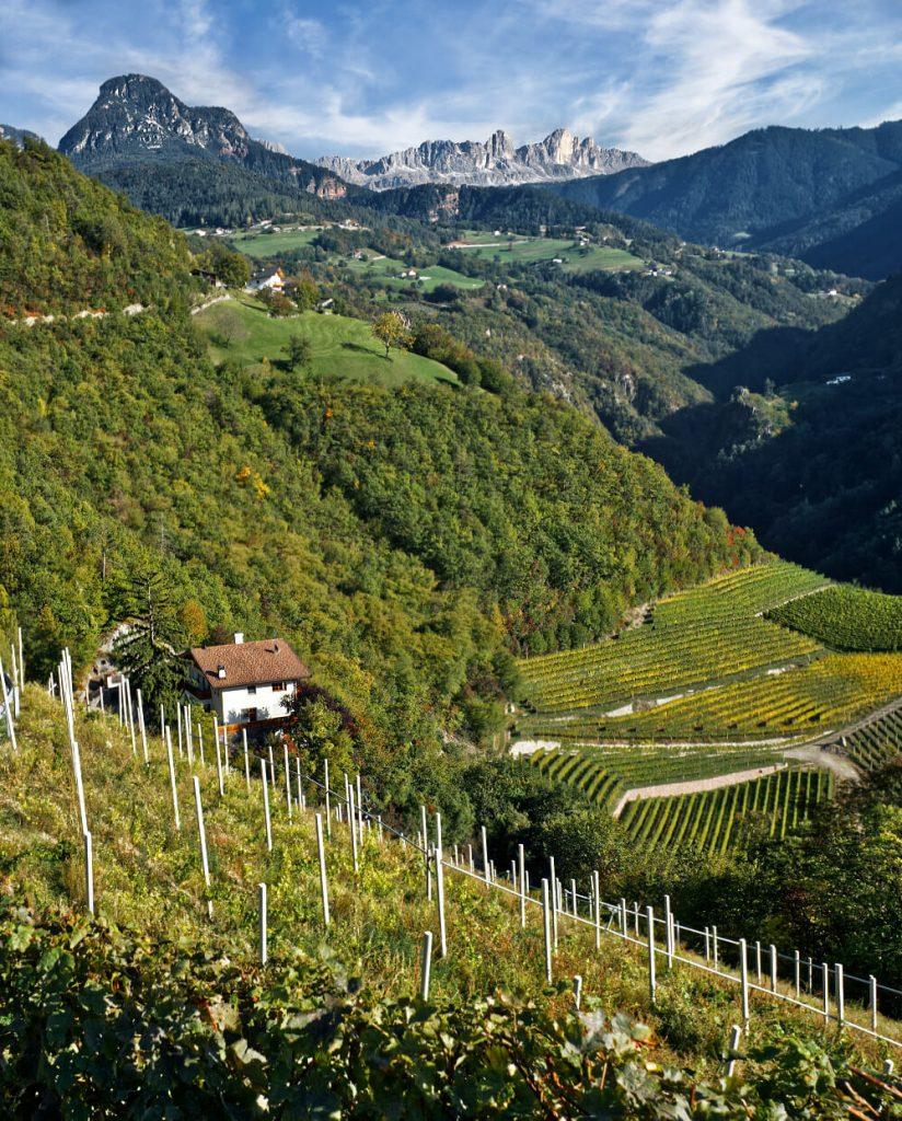 Prackfol Wine Farm: Bounty Beneath the Dolomites 1