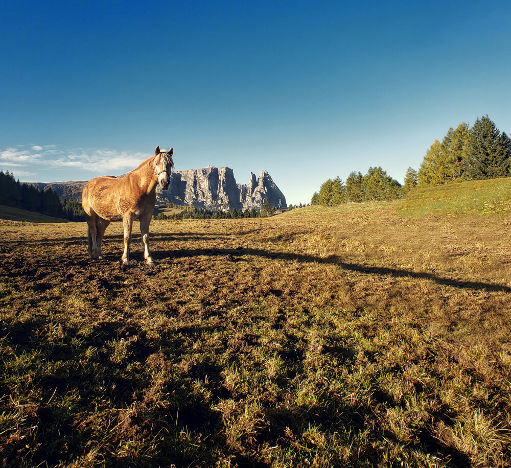 Alpe di Siusi: The Ultimate Guide to Hiking Europe's Largest Alpine Plateau 83