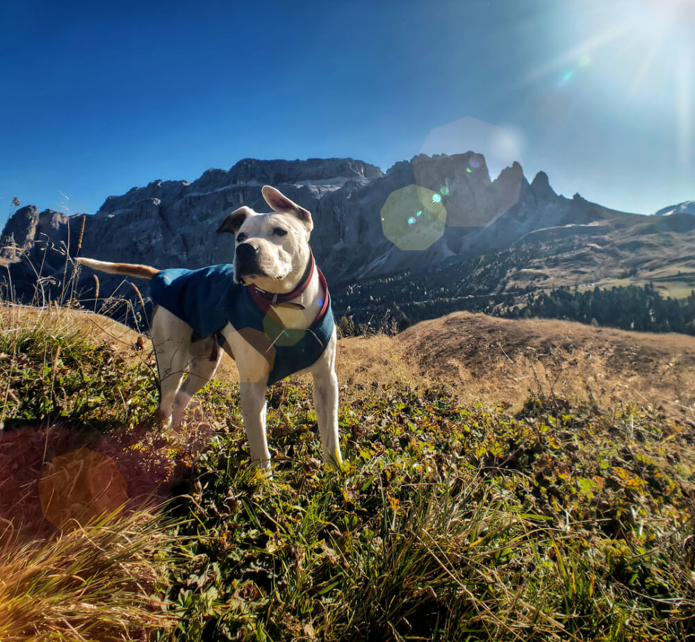 Dog hiking in the Dolomites