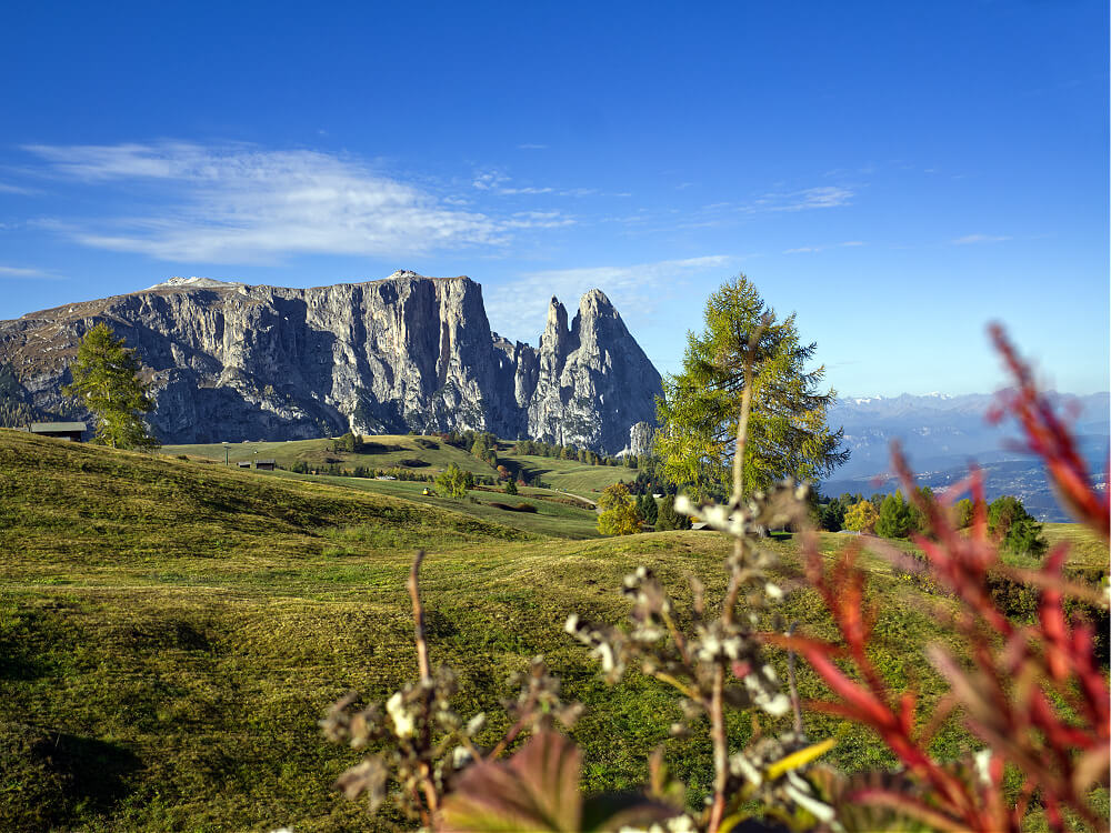 Alpe di Siusi: The Ultimate Guide to Hiking Europe's Largest Alpine Plateau 81