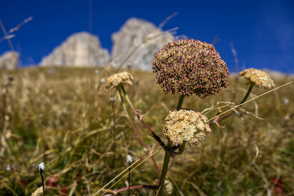 Hiking Sassolungo: The Wildest Peaks in the Dolomites 45