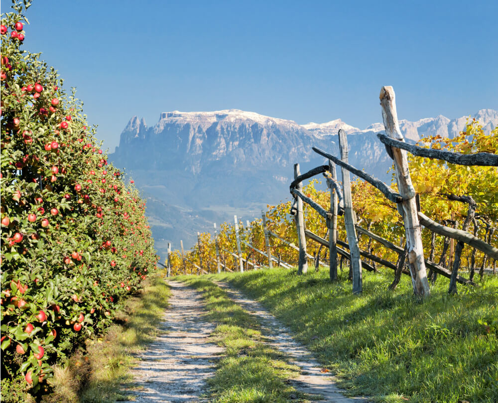 South Tyrolean Apples: Mountains of Goodness in Italy 2