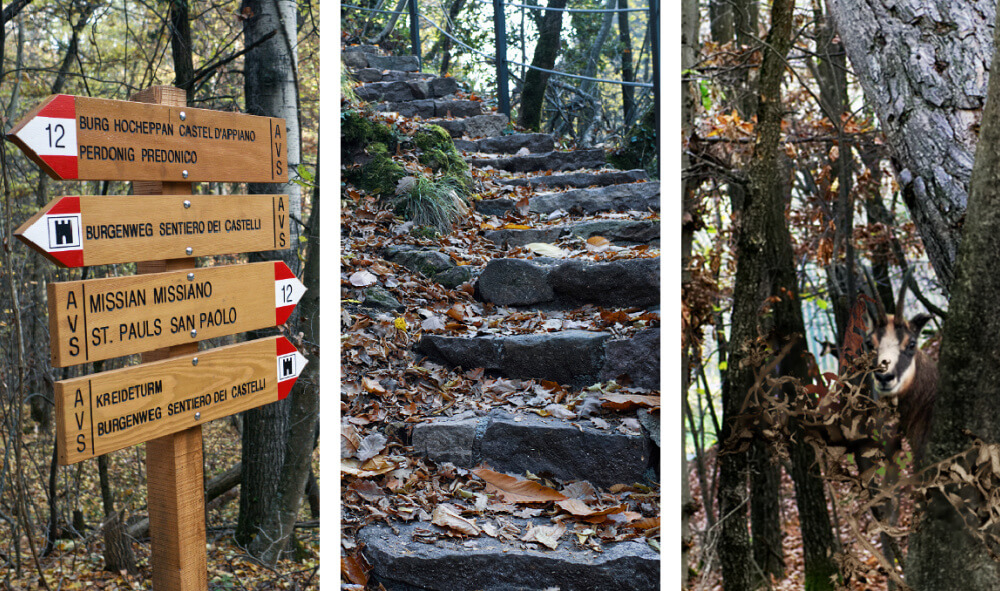 A Halo of Ruin: Hiking to Hocheppan Castle & Beyond 54