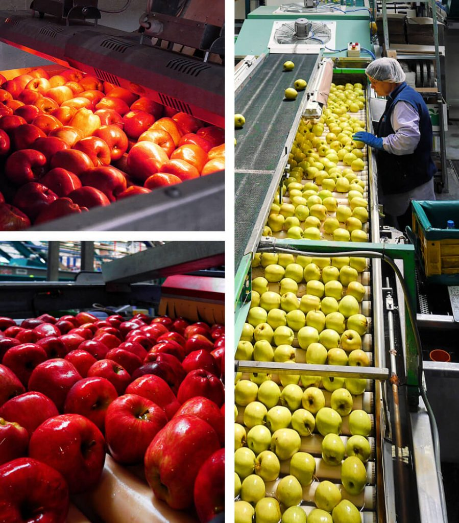 South Tyrolean Apples: Mountains of Goodness in Italy 9