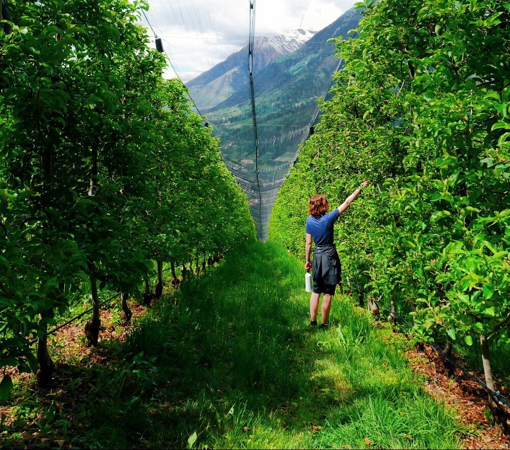 South Tyrolean Apples: Mountains of Goodness in Italy 13