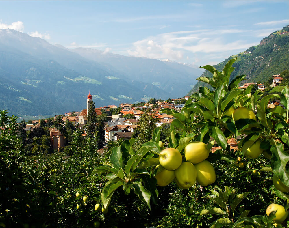 South Tyrolean Apples: Mountains of Goodness in Italy 1