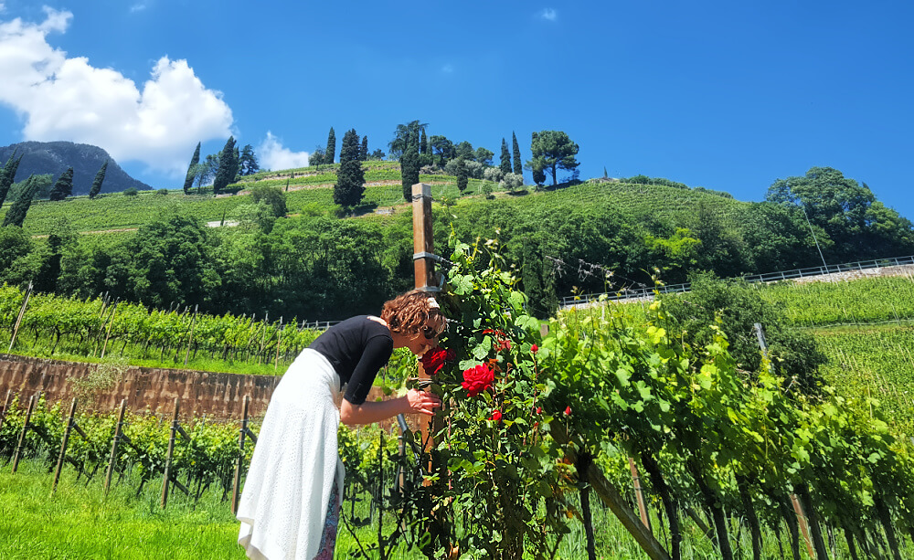 Cantina Tramin Wines: The Soul of the Mountain 11